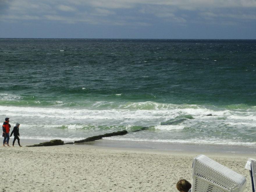 Großflächige Algenverschmutzung am Strand